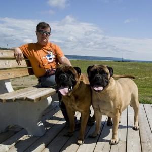 Boardwalk Dogs