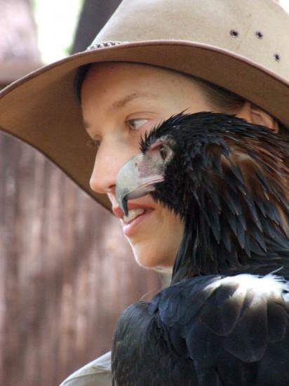Darwin: Wedge-tailed eagle Yarak with handler Nicole (3) - Territory Wildlife Park (c) Vincent Ross.