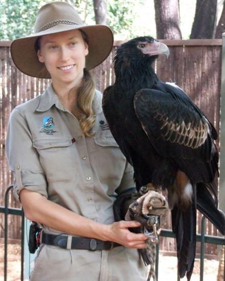 Darwin: Wedge-tailed eagle Yarak with handler Nicole (4) - Territory Wildlife Park (c) Vincent Ross.