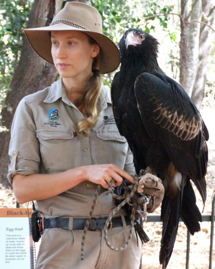 Darwin: Wedge-tailed eagle Yarak with handler Nicole (2) - Territory Wildlife Park (c) Vincent Ross.