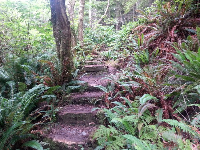 Juan de Fuca trail, near Botanical Beach