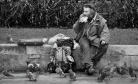 Pigeons and People