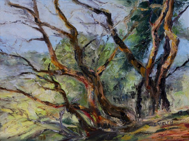 ARBUTUS ON MT. PARKE - 12 x 16 inch oil on canvas by Terrill Welch