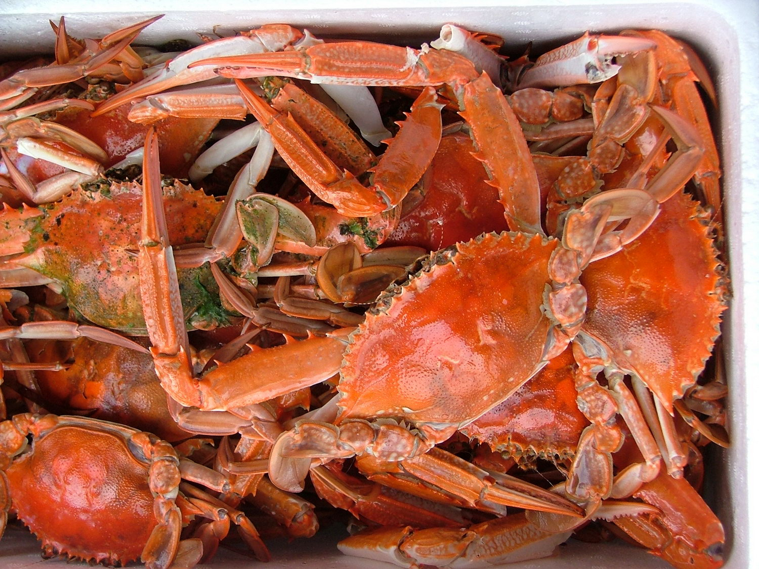 How To Steam Live Blue Crabs
