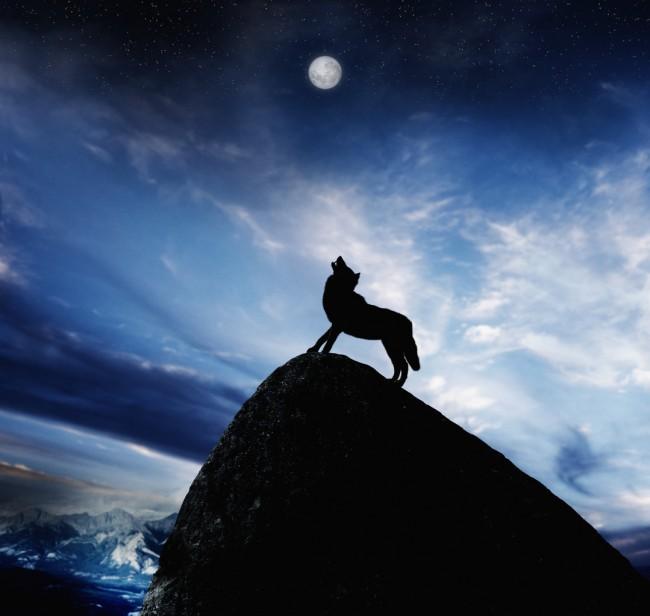 Howling Wolf on Mountain Peak