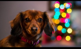 Holiday Dogs and Positive Cheer!