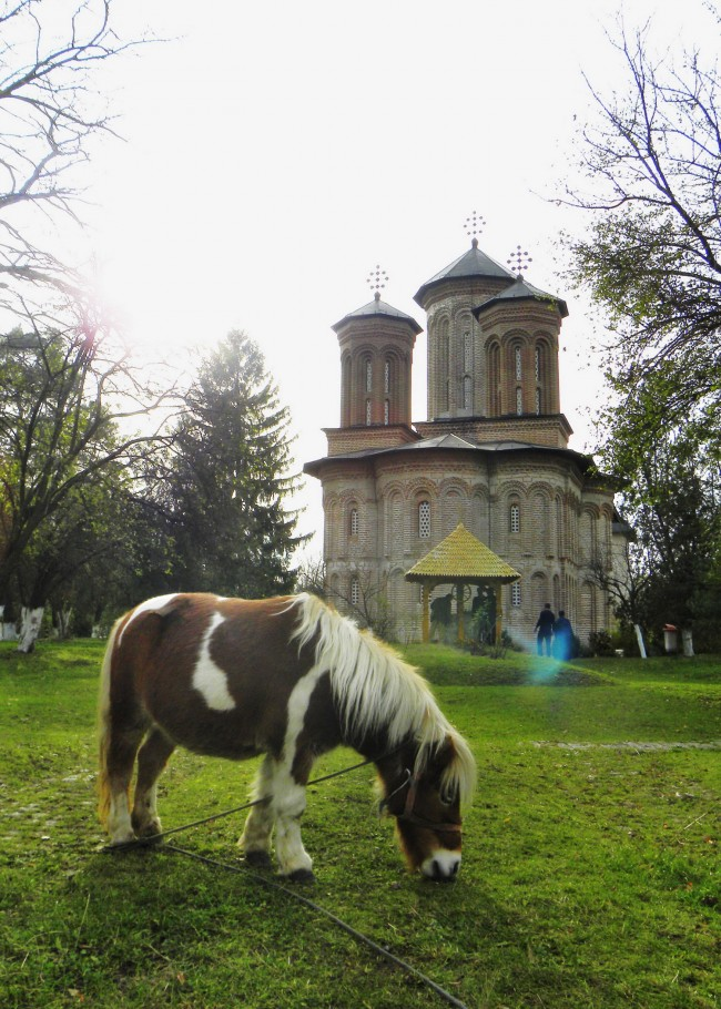 Shetland pony and monastery on Snagov Island