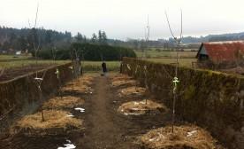 Woodwynn Farms: Labyrinth, Peace Sanctuary Sculpture Park