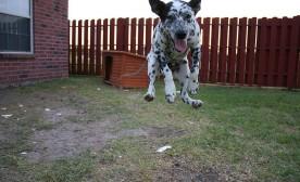 The Shape of Modern Dog Training