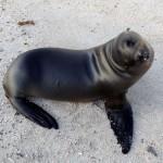 Galapagos 08