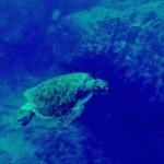Galapagos 18