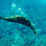 Galapagos 19