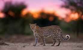 Open Spaces and Predators of the Mystical Kalahari