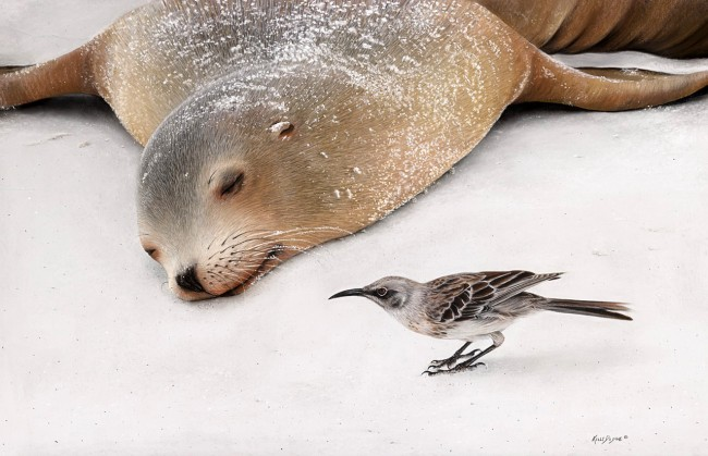Mischief Maker Galapagos Sea Lion and  Espanol Mockingbird - pastel on museum paper