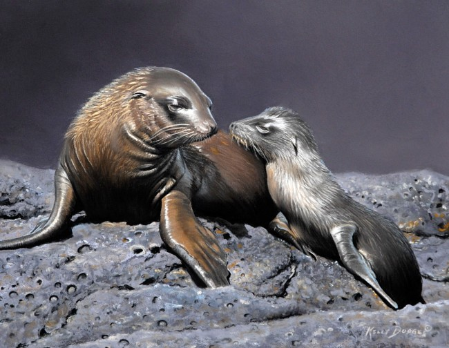 Mother and Child - Galapagos Sea Lions - pastel on museum paper © Kelly Dodge