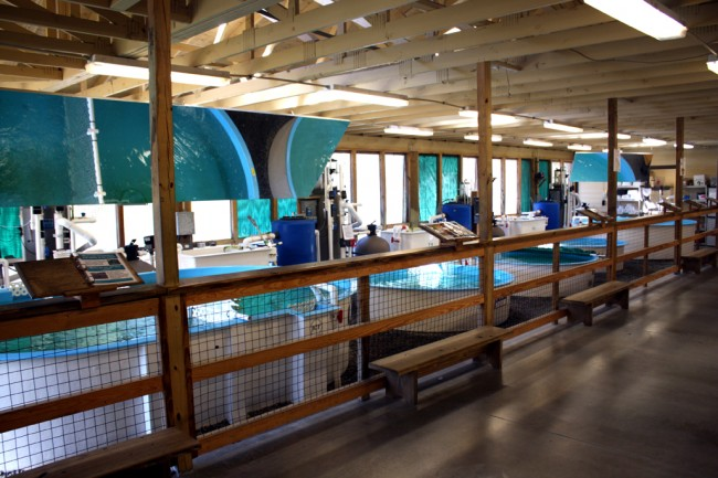 The Rehabilitation Pavillion at the Georgia Sea Turtle Centre
