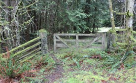 Dispatches From Mayne Island, Part Two: Conversing with Stevens, Einstein and Carr