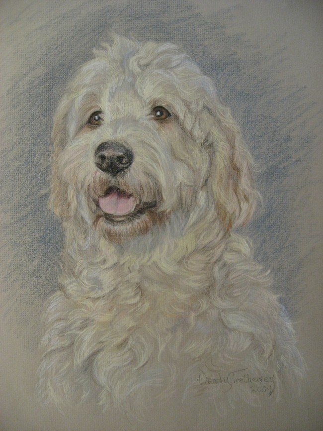 """Nigel"", colored pencil (18""x15"")"