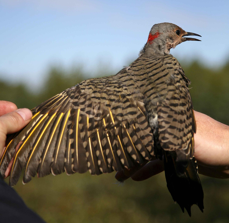 Laura's Birding Blog: ¿Está bien comer jalea para las aves?