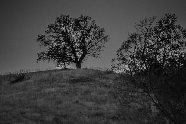 Single tree at daybreak
