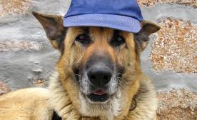 Dog Training Mechanics