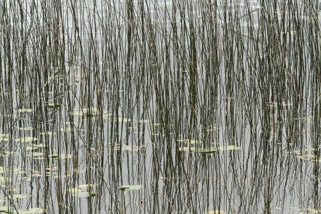 Willow highway