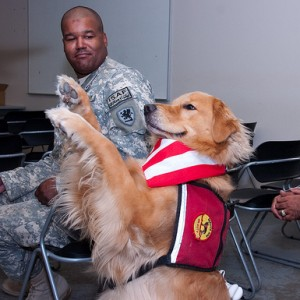 Therapy/Service Dog