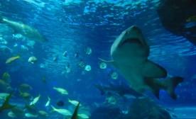 Ripley Has An Aquarium: Believe It Or Not!