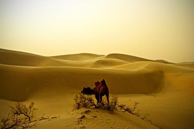 The Taklamakan Desert Scene @ Emanuel Luttersdorfer