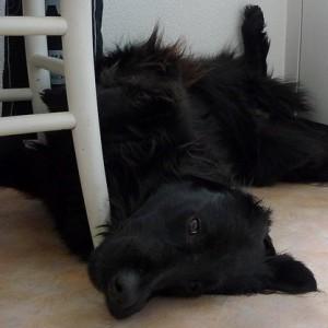 Comfy?