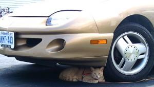 Car-centrism includes our four-legged friends