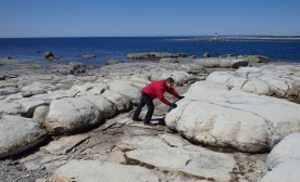 Thrombolites or stromatolites?