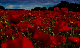 The Legacy of The Poppy