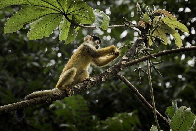 Costa_Rica_Corcovado-National-Park_2910
