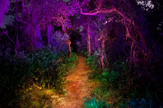 Light Painting - Painted Forest @ Jason D. Page