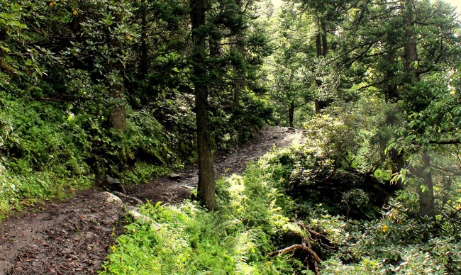 7.The green darkness. After crossing the bridge, you enter the forested slopes that lead towards Tundabhuj.