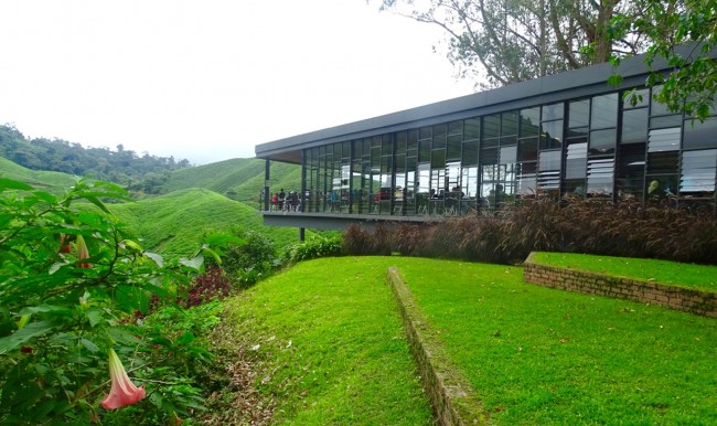 We had tea and pastry in this modern teahouse that was cantilevered over a hill   and offered excellent views of the tea gardens