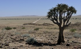 Water Shortages Threaten Namibia's Economy