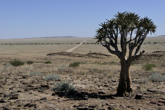 Namibia is primarily a large desert and semi-desert plateau