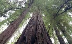 Tree Zen