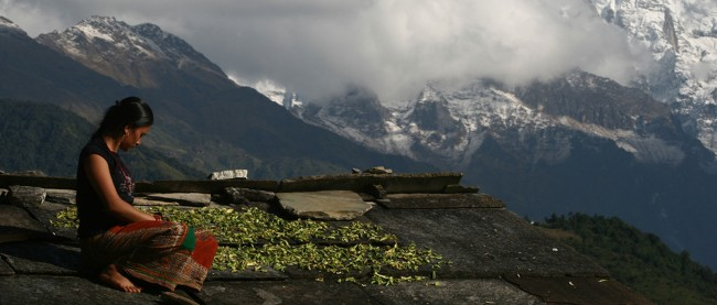 Gurung woman drying beans on the shale rooftop.