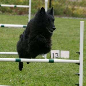 Jumping Tira