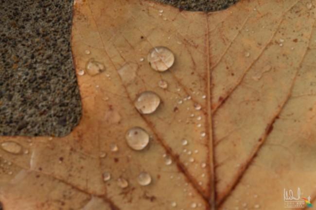fallen leaf with rain