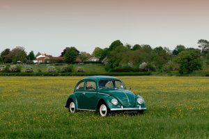 Lonely Beetle