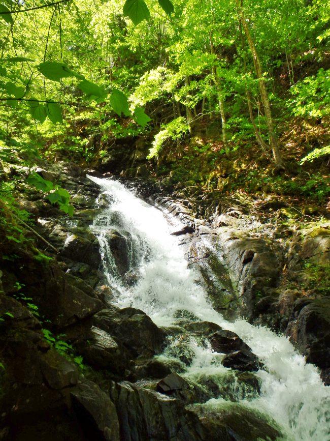 MacIntosh Brook Falls