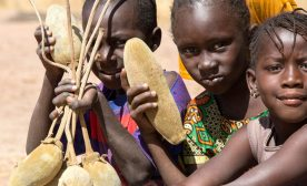 The Buzz About Baobab: A New African Superfood
