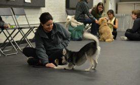 Smarter Trainer, Smarter Dog
