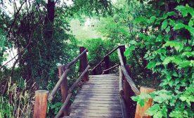 Everyday Pathway