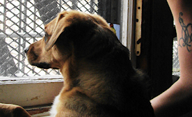 Lessons on Moving into an Apartment with Your Dog