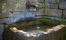 Prevent Water Feature Pest Problems